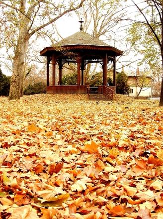 autumn-1402882